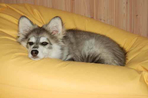 kan slappe av jeg og saccoen er fin hundeseng 23.08.2008